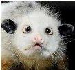 einehund's Profile Picture